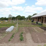 Church Crookham Allotments 2